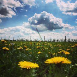 planeta pe care am imprumutat-o de la copiii nostri credit foto stefania verzea pentru simoneciel.ro